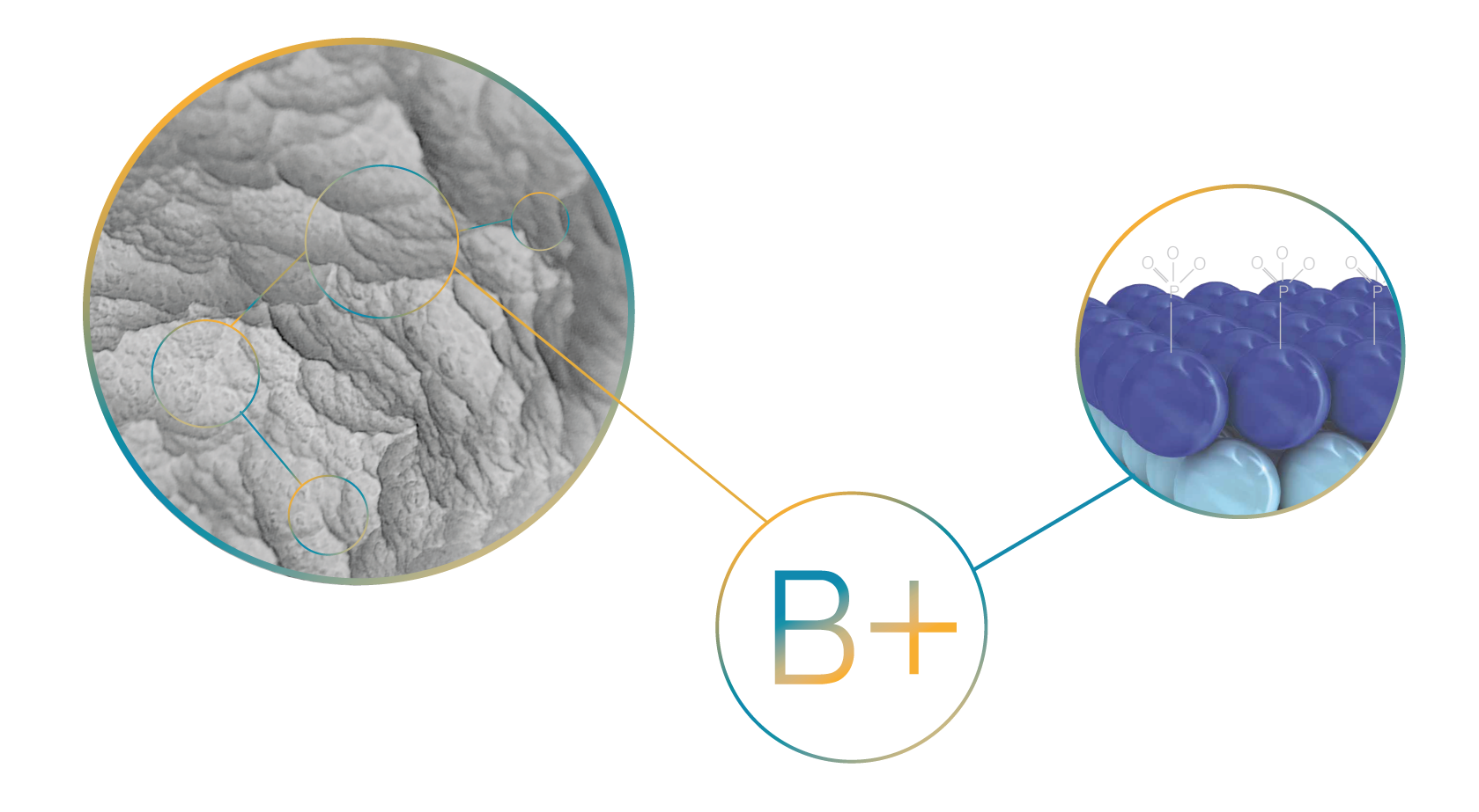 logo-B+-01-01